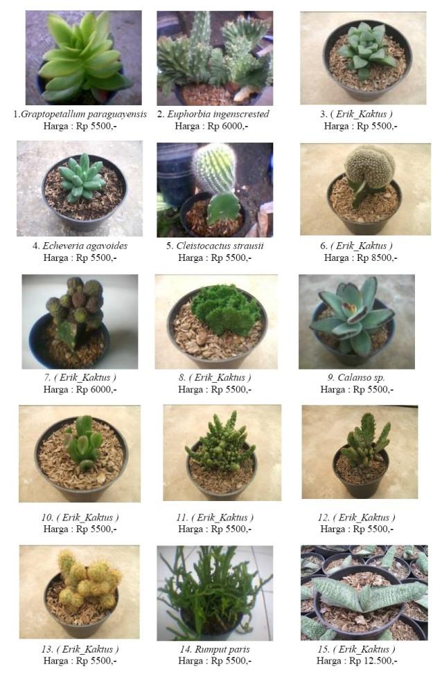 Erik Kaktus Katalog 2