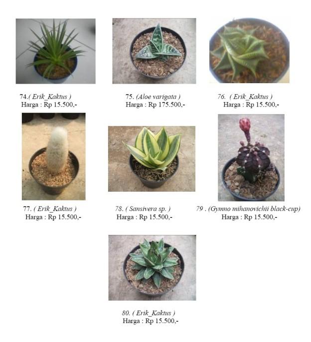 erik_kaktus7.jpg