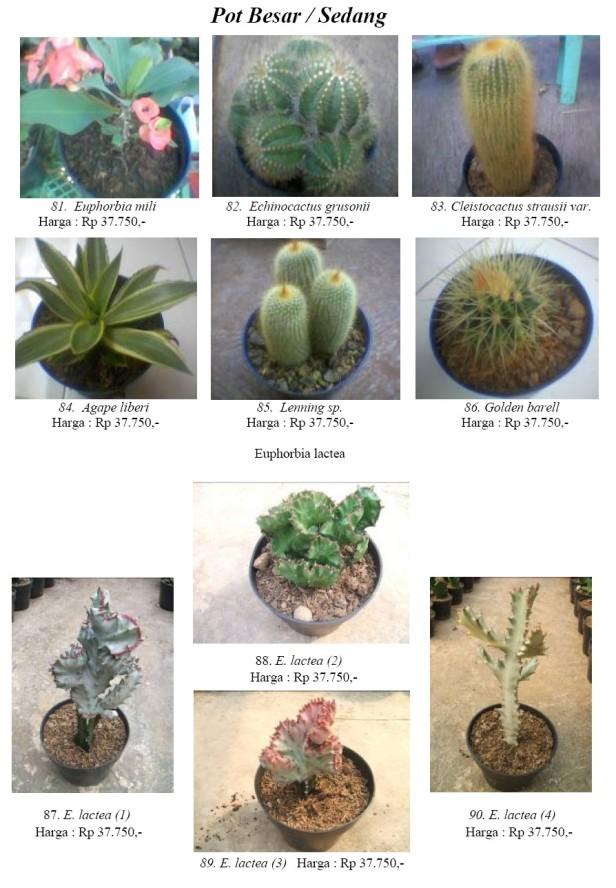 erik_kaktus8.jpg